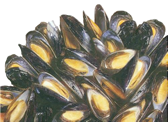 mussel (graphic)